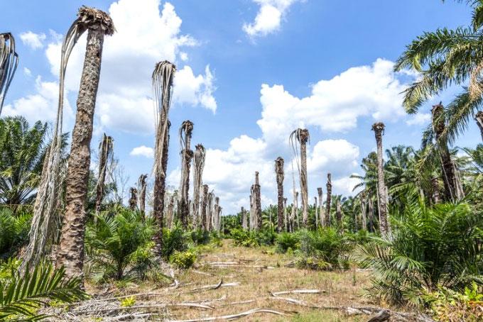 Proč se vyhnout palmovému oleji?
